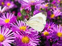 Vlinder en bloemen 2 Stock Afbeelding