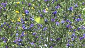 Vlinder en bloemen stock footage