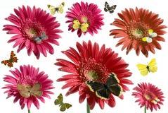 Vlinder en bloemen Royalty-vrije Stock Afbeelding