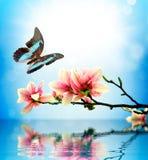 Vlinder en bloemmagnolia Stock Afbeeldingen
