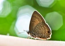 Vlinder en bokeh Stock Foto's