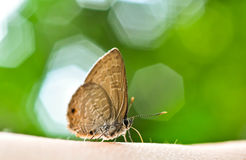 Vlinder en bokeh Stock Fotografie