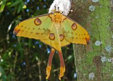 Vlinder en Cocon Royalty-vrije Stock Afbeelding