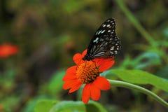 Vlinder en de bloem Stock Foto