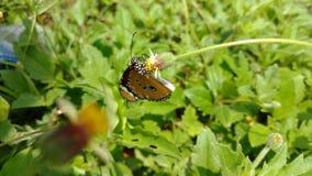 Vlinder en de knop Royalty-vrije Stock Foto