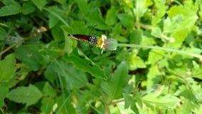 Vlinder en de knop Royalty-vrije Stock Afbeeldingen