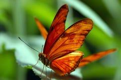 Vlinder en een blad Stock Foto's