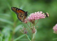 Vlinder en een hommel Stock Afbeeldingen