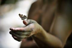 Vlinder en hand Royalty-vrije Stock Afbeelding