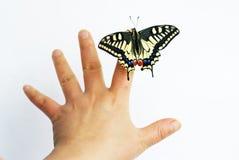 Vlinder en hand Stock Afbeeldingen