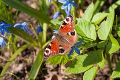 Vlinder en kleine blauwe bloemen royalty-vrije stock foto's