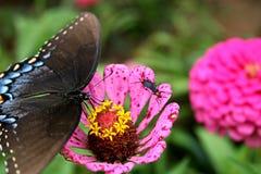 vlinder en liefdeinsect Stock Foto's