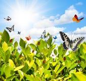 Vlinder en lieveheersbeestje Royalty-vrije Stock Fotografie