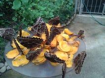 Vlinder en mango's Royalty-vrije Stock Afbeeldingen
