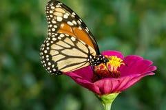 Vlinder en rode bloem Royalty-vrije Stock Foto