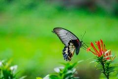 Vlinder en rode bloem Royalty-vrije Stock Afbeeldingen