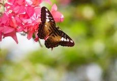 Vlinder en rode bloem op groene achtergrond. Royalty-vrije Stock Afbeelding
