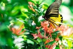 Vlinder en rode bloemen in park van Thailand Royalty-vrije Stock Foto's