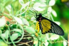 Vlinder en rode bloemen in park van Thailand Stock Afbeelding