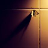 Vlinder en schaduw Stock Afbeelding