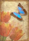 Vlinder en tulpen op oud velijn Stock Afbeeldingen