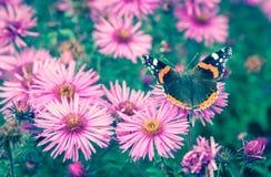 Vlinder en violette bloem Royalty-vrije Stock Afbeeldingen