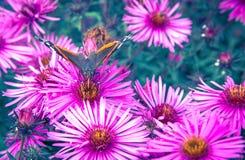 Vlinder en violette bloem Stock Foto