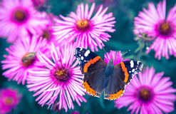 Vlinder en violette bloem Stock Afbeelding