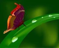 Vlinder en waterdrop Stock Foto's