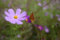 Vlinder en wilde bloem Royalty-vrije Stock Afbeeldingen