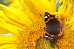 Vlinder en zonnebloem Royalty-vrije Stock Foto's