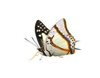 Vlinder (Grote die Nawab) op witte achtergrond wordt geïsoleerd Stock Foto's