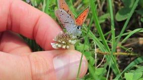 Vlinder in handen stock footage