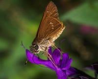 Vlinder het drinken nectar van een bloem stock fotografie