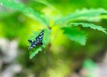 Vlinder in het Gras stock afbeeldingen