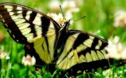 Vlinder in het gras Royalty-vrije Stock Foto