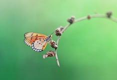 Vlinder het hangen Stock Afbeelding