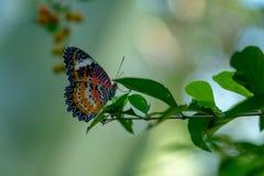 Vlinder het hangen uit op een bladtak stock foto