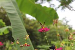 Vlinder het stellen in een tropische tuin royalty-vrije stock afbeeldingen