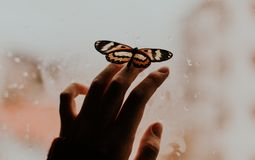 Vlinder het stellen, gember, hand, stelt, venster royalty-vrije stock foto's