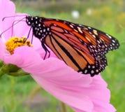 Vlinder II stock fotografie