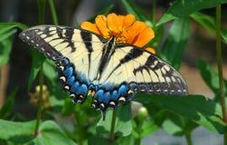 Vlinder II Royalty-vrije Stock Afbeelding