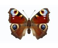Vlinder. Inachis io Royalty-vrije Stock Afbeelding