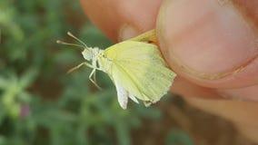 Vlinder leuk snoepje Stock Foto
