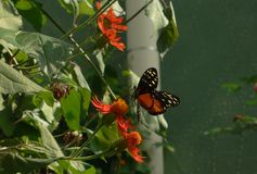 Vlinder in Lincoln Park, Chicago royalty-vrije stock afbeeldingen