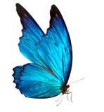 Vlinder macroachtergrond Royalty-vrije Stock Foto's