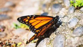 Vlinder macrospruit stock foto
