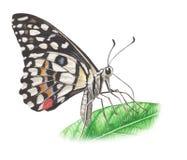 Vlinder met blad Stock Foto