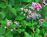 Vlinder met blauwe bloemen Royalty-vrije Stock Foto's