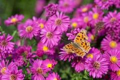 Vlinder met bloemen royalty-vrije stock foto